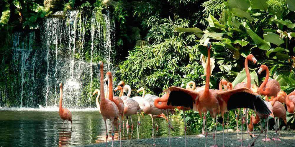 باغ پرندگان جورونگ (Jurong) سنگاپور
