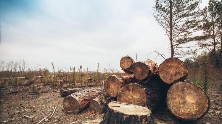 (تصاویر) ماجرای قطع شبانه هزاران درخت