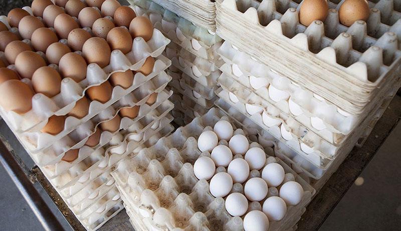 قیمت تخم مرغ در بازار چقدر است؟