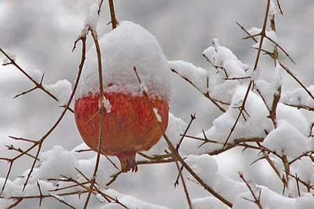 برف و باران پیامد ورود سامانه بارشی جدید به ایران