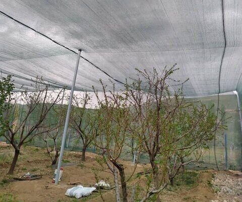 خبرنگاران طرح سایه بان باغی به طور آزمایشی در آذربایجان شرقی در دست اجراست