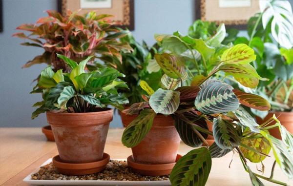 23 گیاه آپارتمانی مناسب برای حمام و دستشویی که در رطوبت رشد می کنند